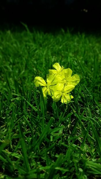 Cada flor es un alma floreciendo en la naturaleza 🌻 Flower Nature Fragility EyeEm Beauty In Nature Yellow Plant