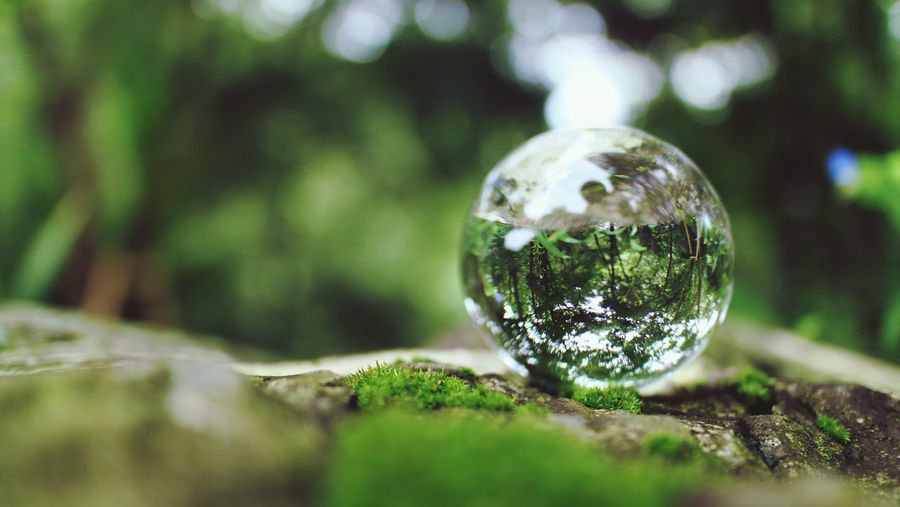 Refraction Lensball Naturelovers Nature Tree Planet Earth Reflection Close-up Grass Sky Green Color Crystal Ball