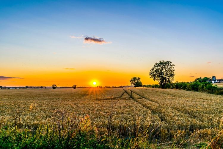 Tranquil scene of agricultural field at sunset