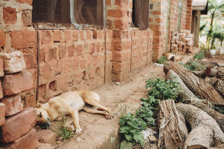 Dog by brick wall