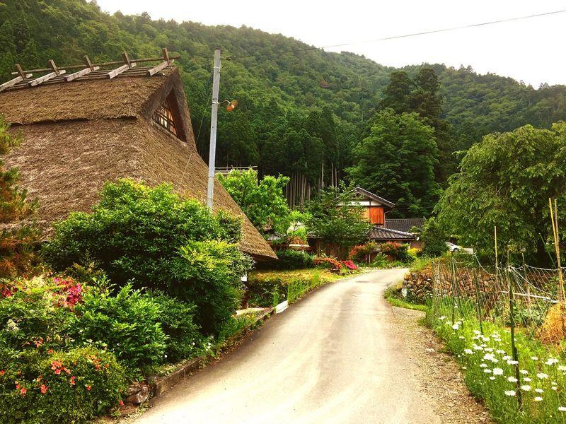 かやぶきの里 茅葺屋根 京都 Tree Road Outdoors Mountain Village No People Nature Architecture Beauty In Nature Sky Day