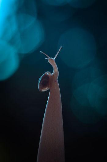 Snail on the blue