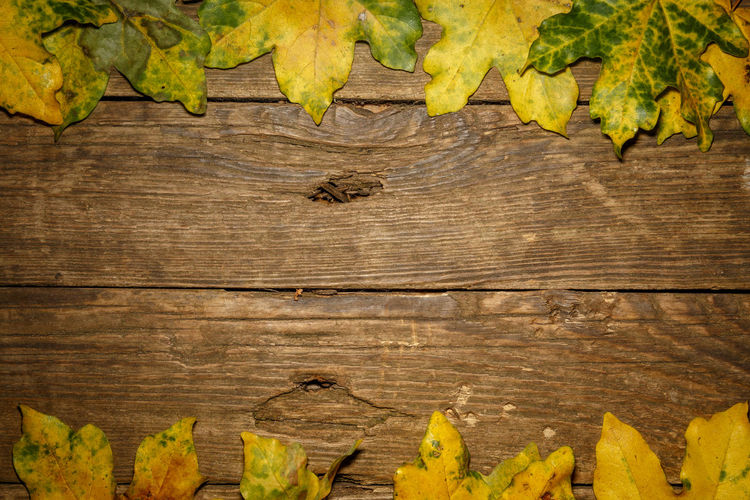 High angle view of leaves on wooden plank