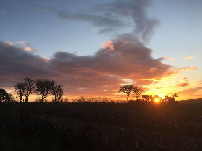 Dawn Scenics -