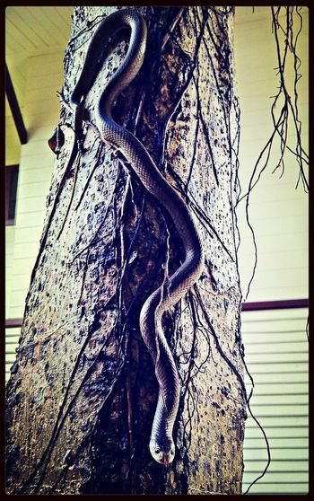 Snake Alarm ;)