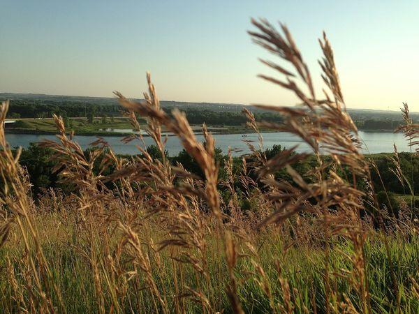 Day 6 - window through the tall grass Dcmacnut365 North Dakota Missouri River Sunset