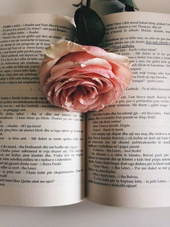 Book Rose - Flower Human Hand Human Body Part Text Flower Close-up People Paper
