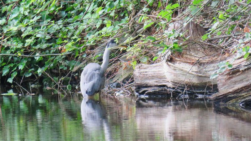 Water Day Outdoors Nature Growth Animal Themes No People Tree Beauty In Nature Heron On The Canal Heron Bird Beauty In Nature