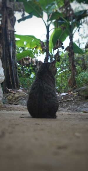 EyeEmNewHere Tree Trunk Tree No People Nature Day Tranquility Selah Miauuu 😺
