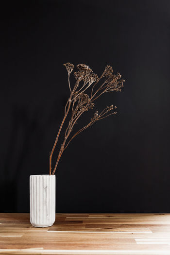Close-up of plant on table against black background