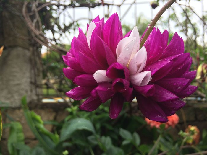 Violet a white Plant Flowering Plant Flower Beauty In Nature Freshness Vulnerability  Fragility