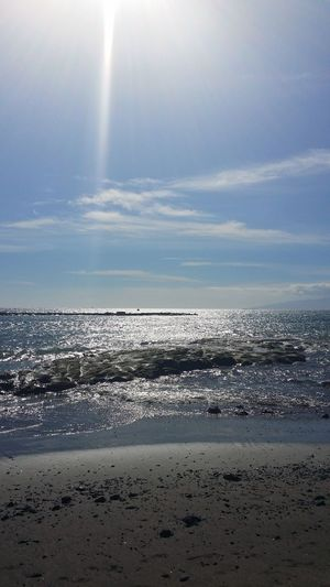 Sea Beach Water Sand Swimming Sky Horizon Over Water Animal Themes Landscape
