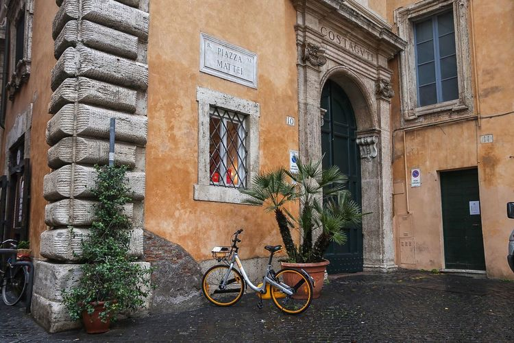 Bicycle by potted plants on wall of building