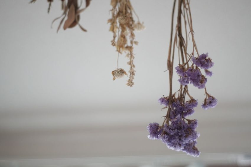 Flower Beauty In Nature Purple Nature Fragility Growth Hanging Plant No People Close-up Tranquility Day Freshness Flower Head Dry Flower  Inmyroom Dry Dry Leaves Purple Flower
