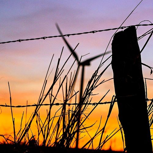Low angle view of silhouette plant against sunset sky
