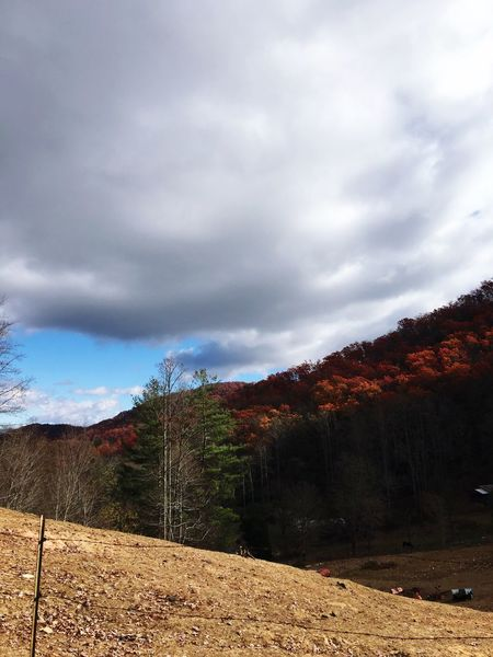 Nature Sky Cloud - Sky Beauty In Nature Scenics Tree Tranquility Landscape Tranquil Scene Mountain Outdoors No People The Way Forward Day Storm Cloud Fall Leaves After The Rain Mountain Range Freshness Autumn Autumn Leaves