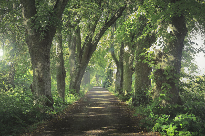 Tree avenue Tree Plant Direction The Way Forward Forest Day Nature Tranquility Growth Land Tree Trunk No People Footpath Trunk Outdoors Diminishing Perspective Beauty In Nature Green Color Tranquil Scene Lush Foliage Treelined WoodLand Tree Canopy