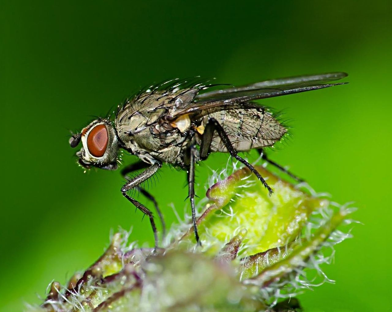 Close-Up Of Housefly On Leaf