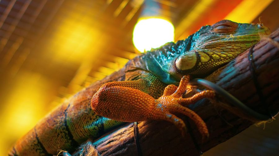 Close-up No People Animal Themes One Animal Animal Multi Colored Indoors  Pattern Insect Still Life Textile Beauty In Nature Animals In The Wild Day Sunlight Animal Wildlife Nature Invertebrate Vibrant Color