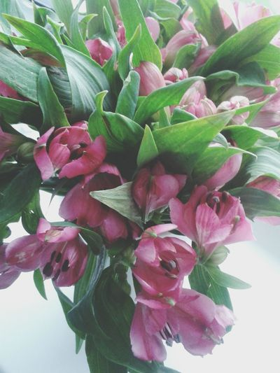 Kwiaty Rozowe ♥