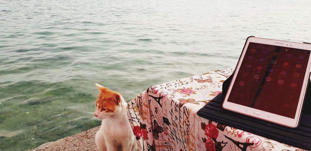 High angle view of dog on beach
