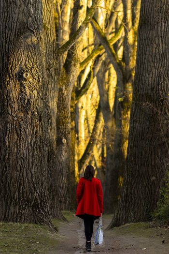 Rear View Of Woman Walking Among Trees