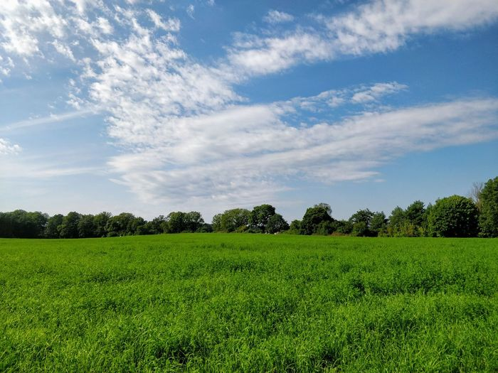 Nature Field Agriculture Landscape Tranquility Beauty In Nature Grass Green Color Tranquil Scene No People Scenics Growth Day Tree Outdoors Sky Brandenburg Backgrounds Copy Space Forest Woods