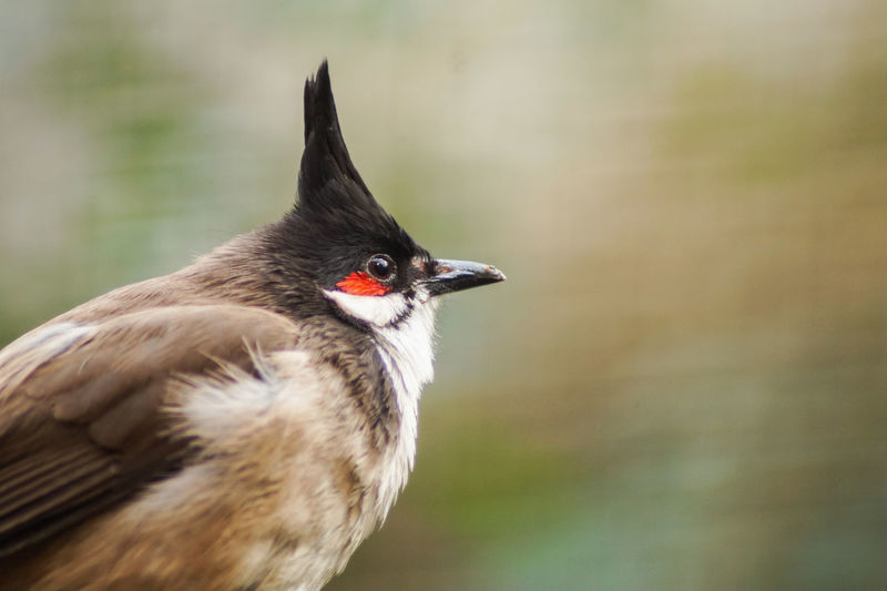 Portrait of a bird Bird One Animal Vertebrate Animal Wildlife Animals In The Wild No People Focus On Foreground Close-up Day Outdoors Nature Looking Beak Animal Body Part Looking Away Plant Flying