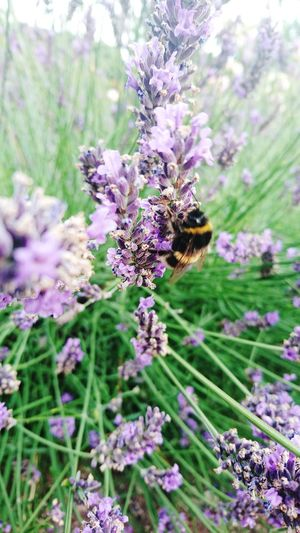 FLOWERS,BEE'S,WESTHAMPARK,OUTWITHFAMILY