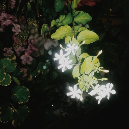 Enjoying Life Hello World Taking Photos Flowers#nature#hangingout#takingphotos#colors#hello Worldflorafauna F