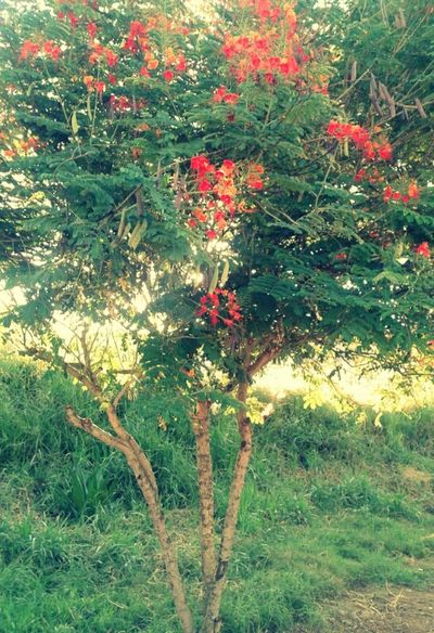 Tree_collection  Beautiful Tree Hugging A Tree Red Flowers Littleflower Naturelovers EyeEm Nature Lover Tree Lover Green Place Enjoying Nature