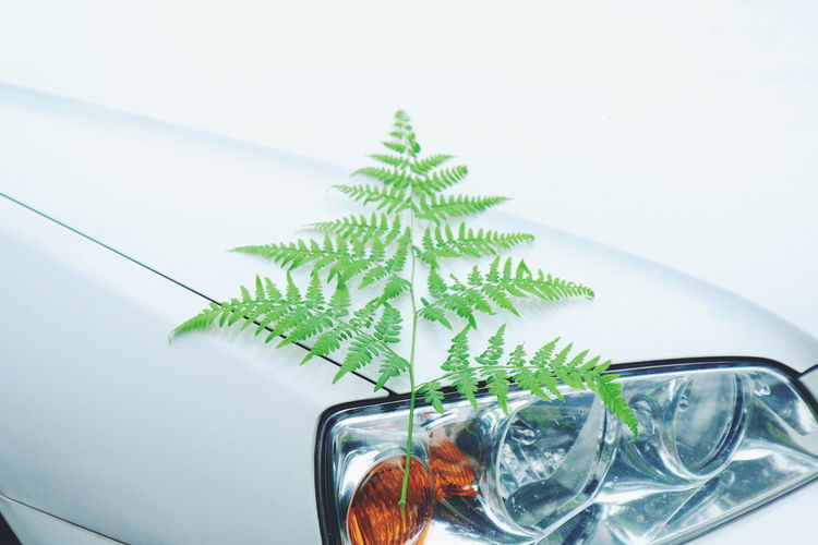 Close-up of plant against car