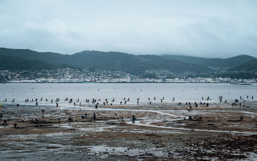 People standing in the sea catching shellfish