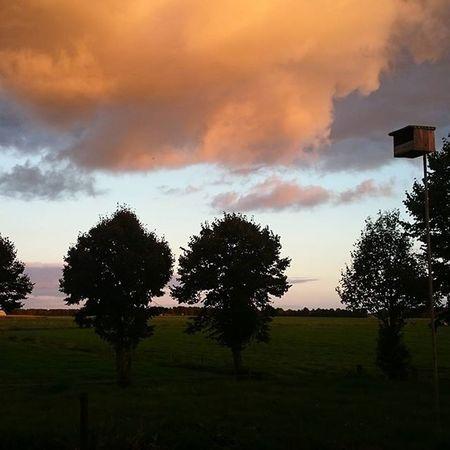We have a amazing sky this night, Proudtobeafarmer Skyline Farmer4life Farmer365 Jabekojo Cows