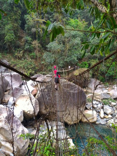 Rear view of people on rope bridge over river in forest