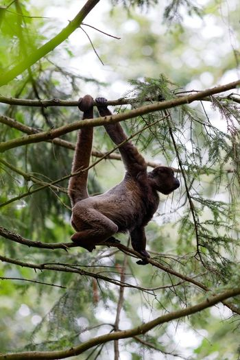 Monkey Business A Day At The Zoo Tree Animal Animal Themes Plant Mammal Branch Animals In The Wild Primate