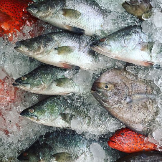 Full Frame Shot Of Dead Fish In Ice For Sale At Market Stall
