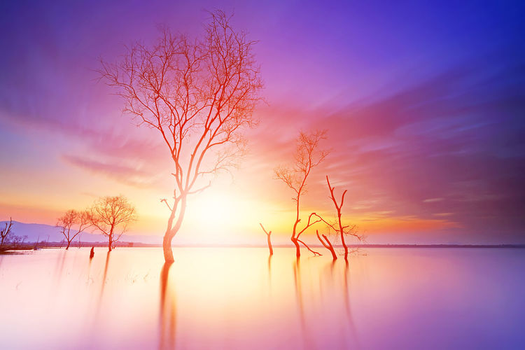 Beautiful landscape with dead trees on a water dam in the morning light of Thailand Water Tranquility Scenics - Nature Tranquil Scene Beauty In Nature Sky Sunset Reflection Tree Nature Bare Tree No People Lake Idyllic Sun Plant Sunlight Cloud - Sky Romantic Sky Sunrise Fog