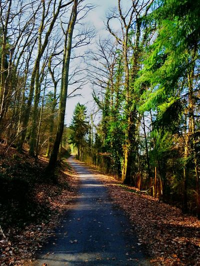 The Way Forward Tree Nature Road Tranquility Forest Outdoors Non-urban Scene Day Beauty In Nature Tranquil Scene Growth Tree Trunk Branch Sky No People