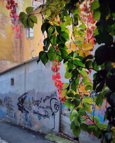 Leaf Graffiti Growth Architecture Autumn Outdoors Plant No People Day Built Structure Building Exterior Nature Tree
