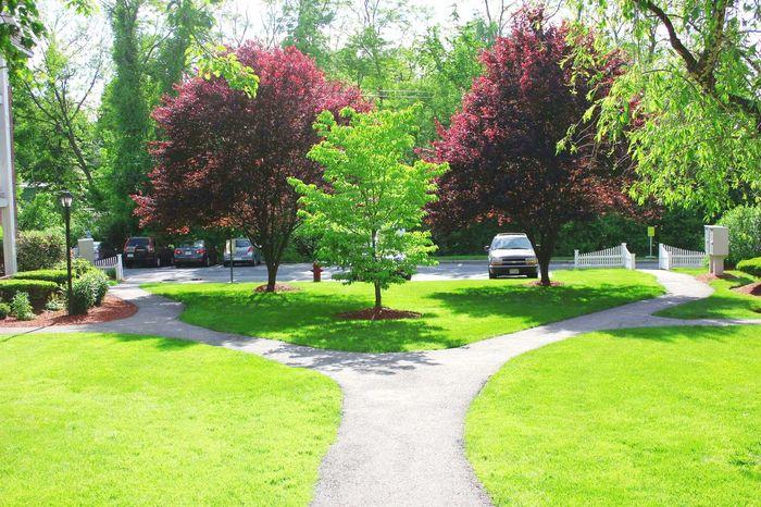 Garden Green Sun Trees