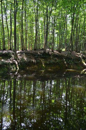 美人林 新潟県 木 水鏡 反射 Tree Nature Forest Reflection Green Color Outdoors Beauty In Nature Landscape Tree Area Japan Japan Photography Water