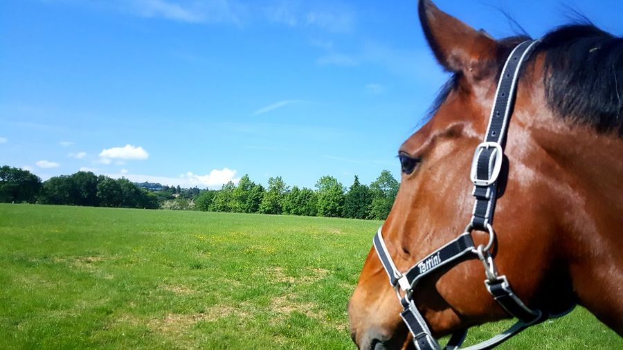 Horse Brown One Animal Field Rural Scene Horse Racing Outdoors Sky Close-up Freshness Grass Day Nature