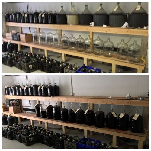 Racked our homemade wine this morning. You siphon the wine from the top bigger demijohns into the smaller carboys. Six more months and it'll be time to rerack them again. WorldsGreatestHobby HomemadeItalianWine ItsAnItalianThing TheExpensiveWinos Nomnombomb Wine