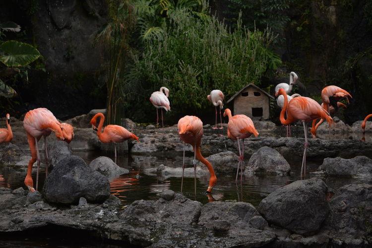 Flock of birds on rock