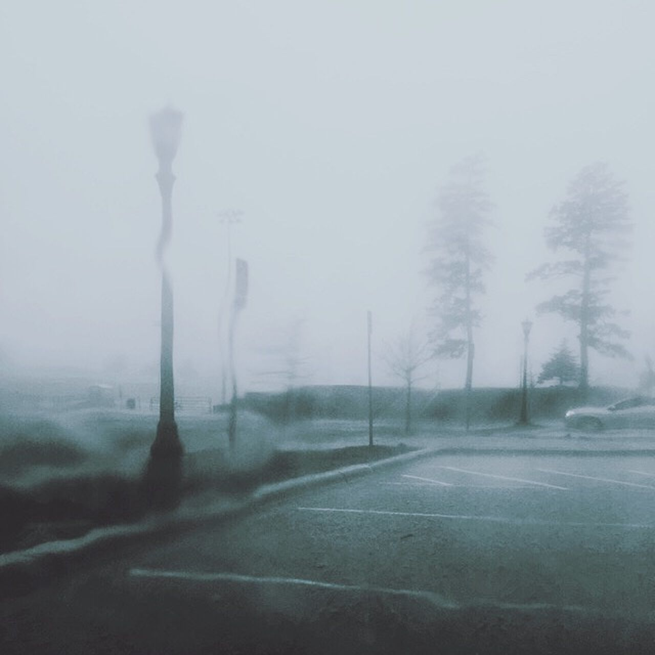 fog, road, tree, sky, no people, transportation, street, nature, environment, day, plant, cold temperature, beauty in nature, tranquility, winter, outdoors, land, landscape, tranquil scene, hazy, snowing