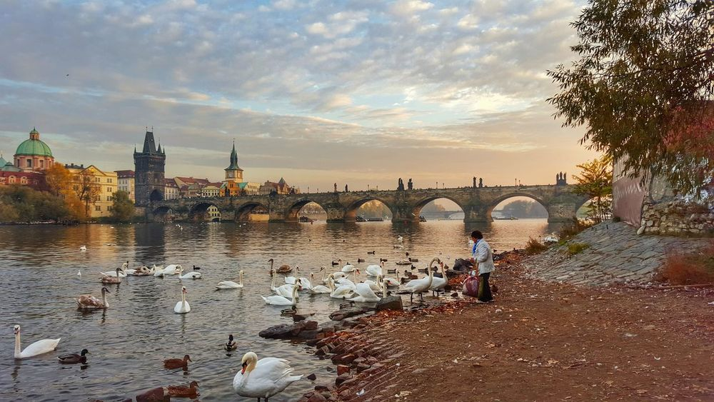 Architecture Bird Built Structure City Cloud Czech Republic Like A Painting Nature Outdoors Painting Peace Point Of View Prague Quiet River Sky Travel Destinations Vacations Water