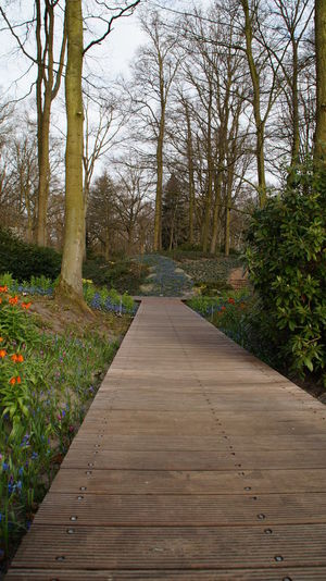 Keukenhof Garden Bare Tree Beauty In Nature Day Growth Keukenhofgardens Keukenhofpark Nature No People Outdoors Plant Sky The Way Forward Tranquil Scene Tranquility Tree