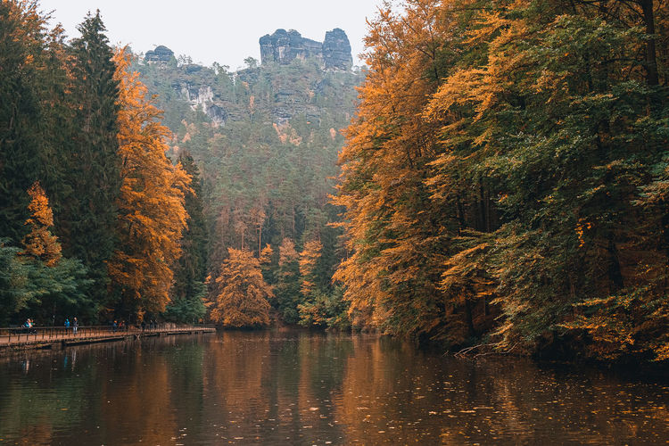 Trees by lake during autumn