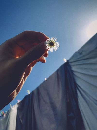 Cropped image of woman holding flower while standing by clothesline against sky